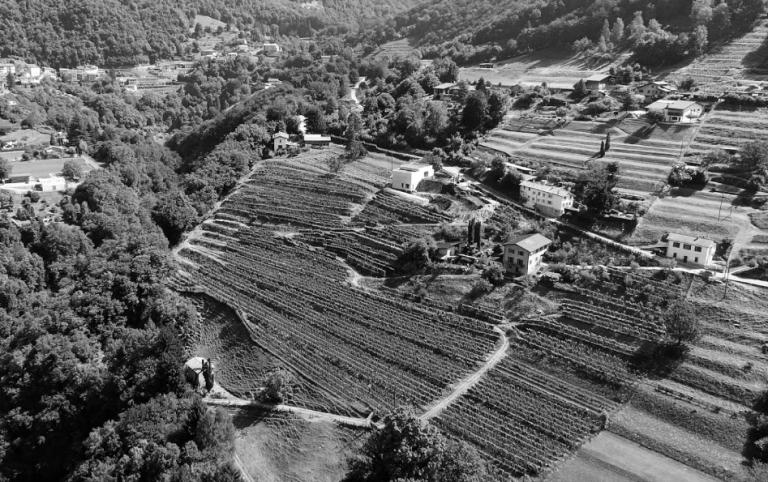 Cantina Azienda Agricola Bianchi, Arogno